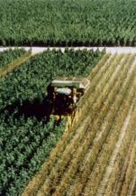 『ピクノジェノール活』で若々しく健やかに! イチョウ葉管理栽培風景